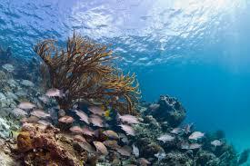 zeeflora